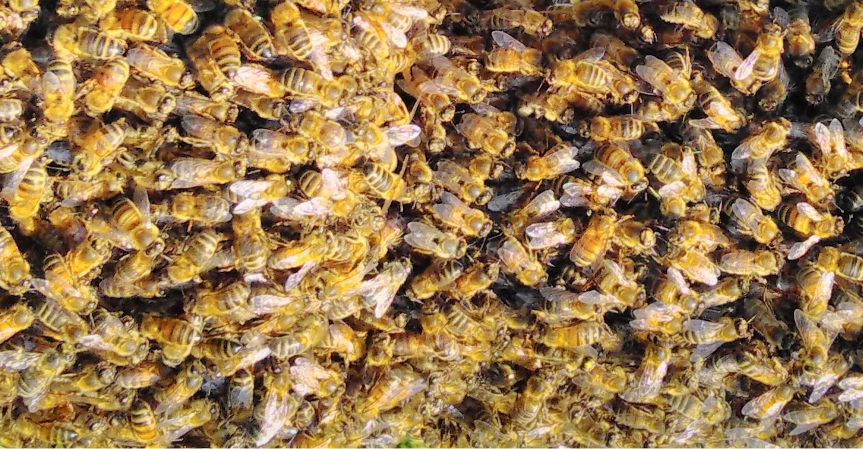 <h2>Bees</h2><div class='slide-content'><p><span class='highlight'>You can keep bees in our apiary, subject to training and safeguards</span></p></div><a href='/beekeepers/' class='btn' title='Read more'>Read more</a>